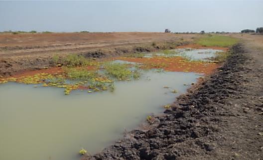 Dry and wet side of road in Gambela Floodplain, Ethiopia