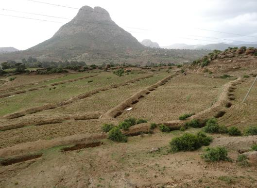 Series of roadside infiltration trenches with bund to intercept additional surface runoff, Tigray, Ethiopia