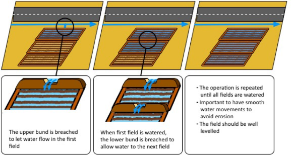 Road runoff is directed to interconnected soaking pits (Sambalino et al. 2016)