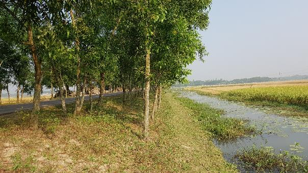 Roadside borrow pit for rice drainage and fishery in Bangladesh